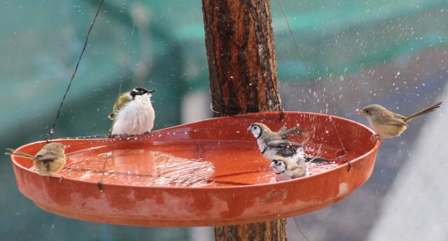 Finches, Honey-eater and Fairy Wrens