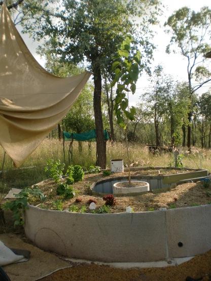John's horseshoe-shaped wicking garden bed.