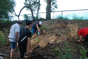 Planting - 12 Apr 2015