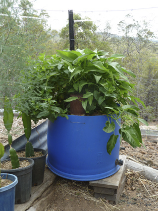 Image retrieved from http://lockyervalley.org/category/wicking-beds-pots/