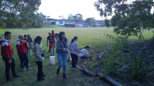 Creating bush habitat in school yard
