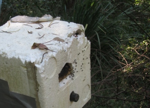 stingless-bee-hive-insulated-15-may-2015