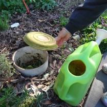 Compost bin - 25 June 2016