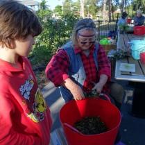 Sandra composting - 25 June 2016