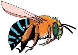 blue-banded-bee-no-background1.png