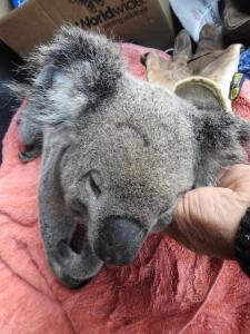 Koala 2 - Nathan onramp - 3 July 2017