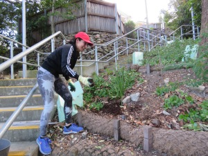 Mulching new plants