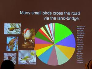 Small birds use road bridge lr