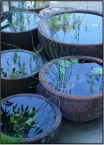 Container Frog Ponds
