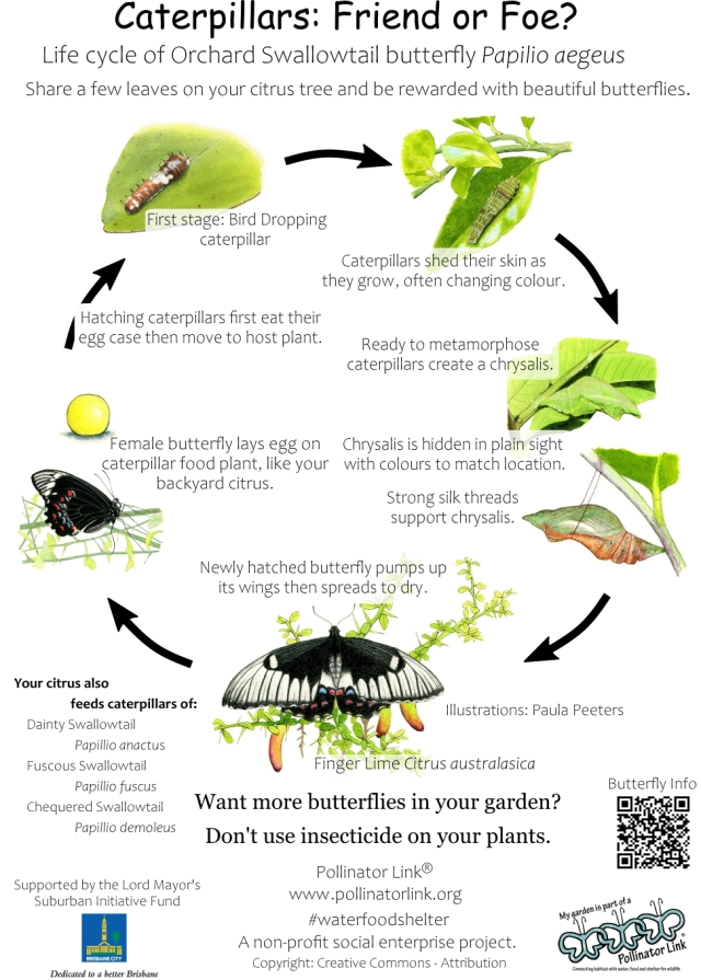 Butterfly Lifecycle - ver 3.3